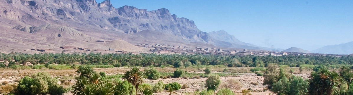 palm-tree-picture-in-desert-with-mountains.crop